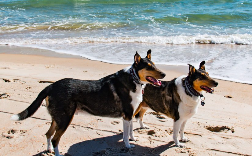 Tourism leader supports beach access for pups